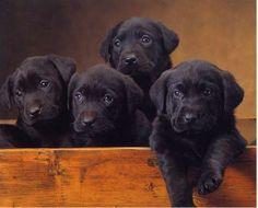 A box of cuteness