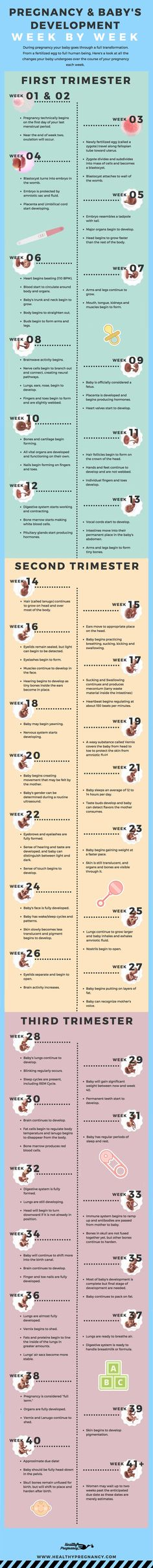 Pregnancy is a nine-month rollercoaster of changes. This guide can help you understand the changes  your baby will be going through during each week of your pregnancy.   Pregnant | Week by Week | Calendar | Pregnancy Calendar | Baby's Development | Fetus Development | Baby's Growth (scheduled via http://www.tailwindapp.com?utm_source=pinterest&utm_medium=twpin&utm_content=post197578579&utm_campaign=scheduler_attribution)