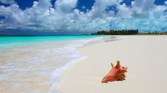 tropical sea beach shell hd wallpapers download