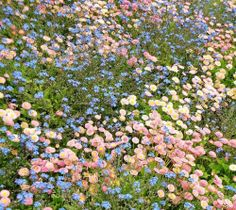 - ̗̀ plants are friends ̖́- Spring Aesthetic, Nature Aesthetic, Flower Aesthetic, Aesthetic Pastel, Aesthetic Dark, Aesthetic Grunge, Aesthetic Vintage, No Rain, Rain Fall