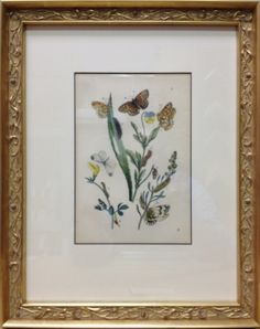 Antique botanical print in real gold leaf frame from Masten Fine Framing & Gifts.