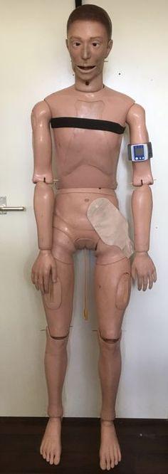 CLA Germany - Levensgroot (studie /oefen) model ziekenhuispop - Catawiki