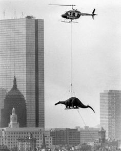 Helicopter delivering a dinosaur to the Boston Museum of Science in 1984.
