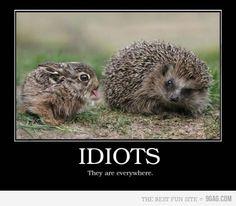 idiots are everywhere @Cameron Merrill; @Jennifer Underhill
