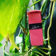 Urban Jungle #Pink #Fitbit #ChargeHR #shopping #tgif #Rosa