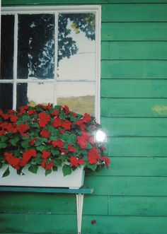 FlOWERS ON A WINDOW - by Unknown Photographer - Vermont  http://conta.cc/1bXaCZb