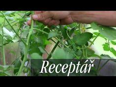 Video: Jak rajčata chránit před plísní? Jak je zaštipovat, aby hojně plodily? - Užitková zahrada Celery, Flora, Herbs, Vegetables, Garden, Youtube, Ideas, Garten, Lawn And Garden