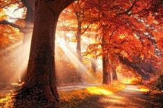 Fall on Fire by the Photographer Lars Van De Goor.