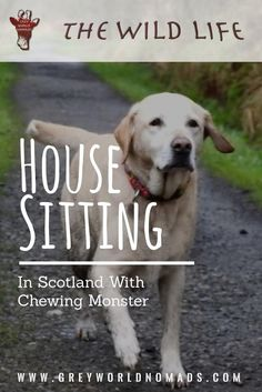 We were house sitting in Scotland when the desperate call of a young mother of a family with three children and lots of animals reached us. Oh, I hope so, that you are available. My planned house sitter let me down only a few days before the assignment! #housesitting #scotland #dogs