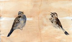 Two Sparrows - Signed Limited Edition Print