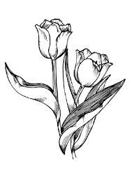 How to Draw Flowers : Drawing Tutorials & Drawing & How to Draw Flowers, Blossoms, & Petals Drawing Lessons Step by Step Techniques for Cartoons & Illustrations Nature Drawing, Plant Drawing, Painting & Drawing, Drawing Lessons, Drawing Techniques, Drawing Tips, Drawing Hair, Drawing Faces, Sketch Drawing