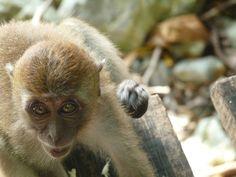 Wrinkly baby face monkey,Krabi, Thailand   Flickr - Photo Sharing!