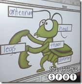 Labeling Praying Mantis body parts. My kids LOVED this activity!
