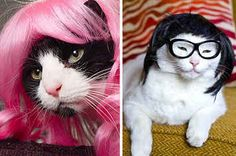 21 Cats Who Are Literally Wigging Out