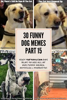 View Priceless New Pictures Of Cute Pups Such As Beagles, Puggles & Labradors & Find Out What They're Really Thinking With Our Trademark Brain Reading Machine, Only @ TufToys.com :) Dog Jokes, Dog Humor, Funny Dog Memes, Funny Dogs, Funny Looking Dogs, Dog Water Fountain, Dog Dna Test, Waterproof Dog Coats, Dog Crate Cover