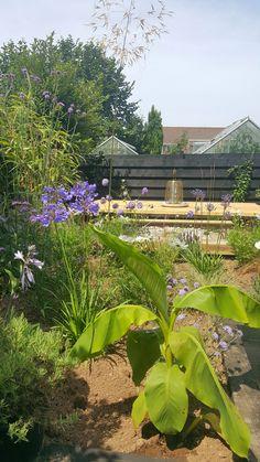 Garden makeover, Phase 1. Alice in Scandiland