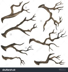 Watercolor Dry Tree Branches, Twigs Set Closeup Isolated On White ...