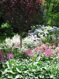 perrennialmix around terrace:  - astilbe, hosta, fern, hydrangea