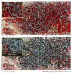 Satellite images reveal devastation of Boko Haram massacre in Nigeria: Before-and-after photographs show more than 3,100 structures destroyed by fire in villages where hundreds, perhaps thousands, were killed - 'I walked through five villages and each one was empty except for dead bodies.' In Baga, a densely populated town less than two square kilometres in size, about 620 structures were either damaged or completely destroyed by fire.