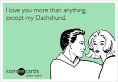 I love you more than anythingexcept my Duchshund.  -photo credit to the owner #dogs #cats