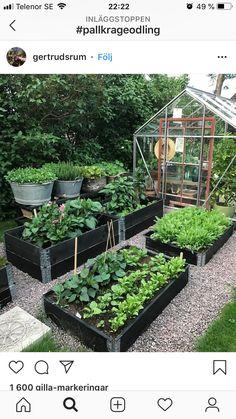 Best 52 Vegetable Garden Design Ideas for Green Living - Bepflanzung