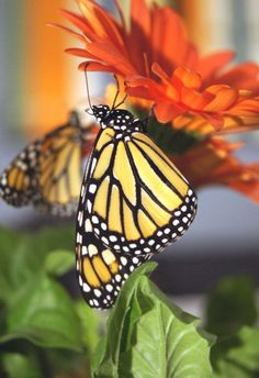 Flutters By: Butterfly Garden How To