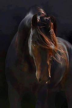 (96) I Love Horses