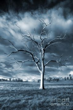 ✮ The Blue Tree