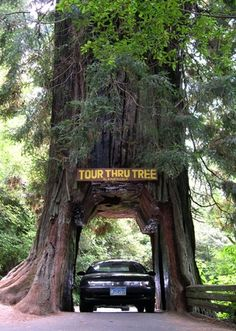 Redwoods National Park, California, this summer! Can't wait for our break. :)