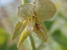 Se ha montado el chalet en lo que fue una flor de guisante, después de arrancar la vaina.