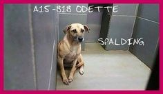 THIS JUST IN: Sweet Odette in GA, tweeted 10/1, is now SAFE w/ #Rescue!! Dog Bless the Rescuers & mighty Retweeters.