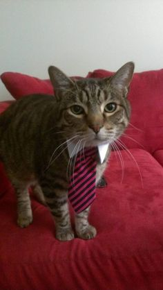 Ready for his day at the office