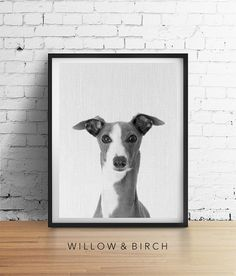 Printable Art Italian GREYHOUND Dog, Animal Nursery Wall Art, Black and White Photograph, Animal Portrait Poster, Dog Lover Gifts Download