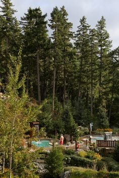 Trees stand tall over the pools at Scandinave. Photo: Rachel Rilkoff