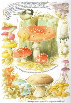 Fly agaric Mb