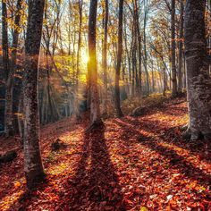 Imported from image metadata:⁣ Beautiful autumn forest in crimean mountains at sunset. Nature⁣ ⁣ Beautiful autumn forest in crimean mountains at sunset. Summer Nature Photography, Forest Mountain, Wanderlust, Nature Artwork, Autumn Forest, Nature Animals, Science And Nature, Nature Pictures, Beautiful