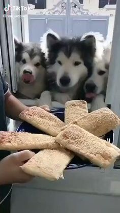 Cute Baby Dogs, Cute Funny Dogs, Cute Dogs And Puppies, Cute Funny Animals, Cute Cats, Doggies, Funny Dog Videos, Cute Animal Videos, Cute Little Animals