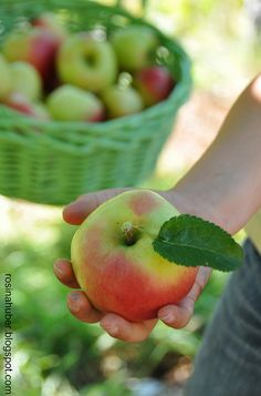 applecottage.quenalbertini: It's apple harvest time, so let's do a red and green apple farmhouse