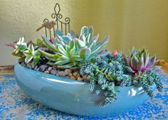 Blue succulent centerpice