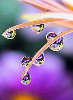 37 super Ideas for amazing flowers photography nature dew drops Water Drop Photography, Levitation Photography, Creative Photography, Amazing Photography, Art Photography, Micro Photography, Dew Drops, Rain Drops, Fotografia Macro