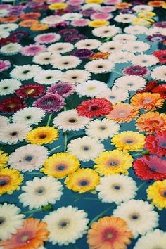 Floating Florals: If have reception at Michelles, fill her pond with sunflowers!