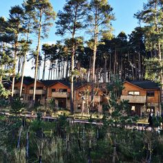 Exploring the UK, a winter getaway, Center Parcs Woburn, via Year of the Yes