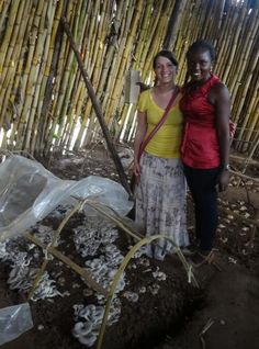 Start a Mushroom Farm | Mushroom cultivation in The Third World | Scoop.it