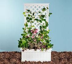 hide an electrical box with a trellis - Google Search