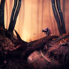 The lies about dark forests