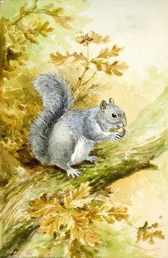 Grey Squirrel by Roland Green, illustration for Ladybird Book 'British Wild Animals', 1958