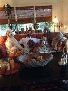 Raisingourstandards poodles 4 days !