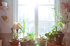 Tila, Plants, Planters, Plant, Planting