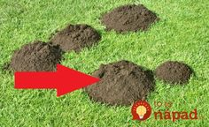 Mole Control - Keeping Your Lawn And Garden Beautiful Gardening For Beginners, Gardening Tips, Gardening Books, Moles In Yard, Mole Holes, Mole Repellent, Quick Garden, Taupe, Plantation