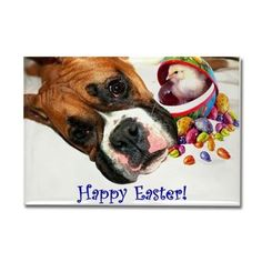 Easter Boxer Dog Rectangle Magnet  #boxer #cards #easter #greetings #card #boxers #dog #pet #holiday #magnet #magnets